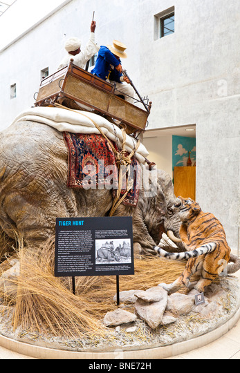 An exhibit of a tiger hunt in the Royal Armouries Museum, Leeds - Stock Image