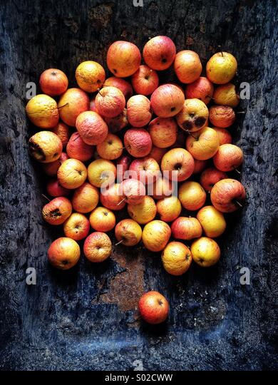 Rotting apples in metal wheelbarrow - Stock-Bilder