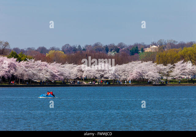 Washington, D.C., Cherry Blossoms.  Paddle-Boating on the Tidal Basin.  Custis-Lee Mansion on Hilltop in Background. - Stock Image