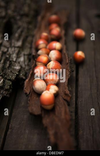 Fresh hazelnuts with bark - Stock Image