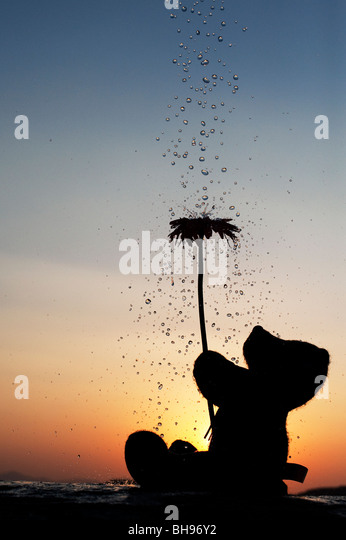 Teddy bear holding a flower with water drops pouring over them at sunset. Silhouette - Stock Image