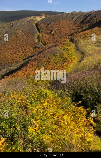 Autumnal colour on a coastal path near Crackington Haven in Cornwall. - Stock Image