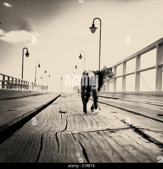 Cat walk blac&withe sunny sea - Stock Image