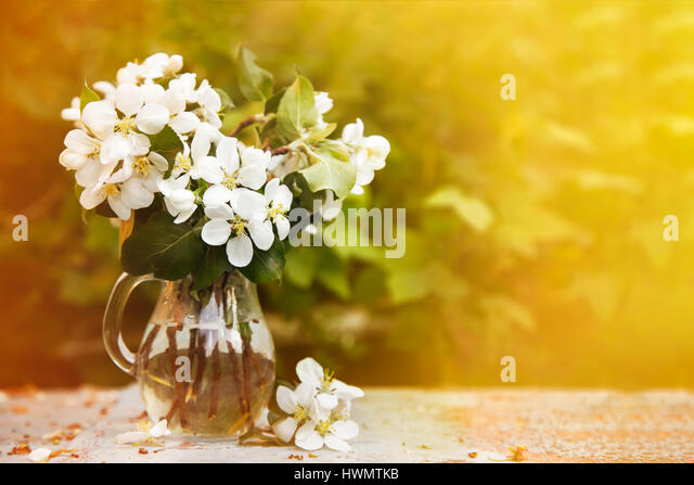 Cherry blossom bouquet - Stock Image