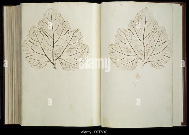 Plant Illustration - Stock Image