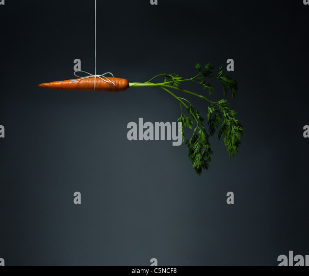 A carrot dangling on a string - Stock Image