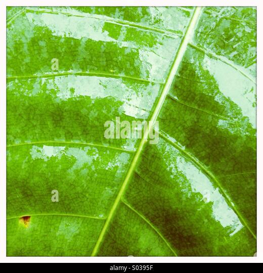Jungle Leaf - Stock-Bilder