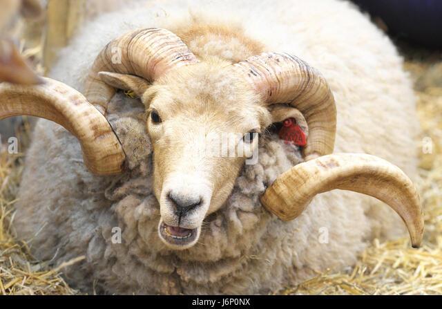 f0096c8e5e4e Buy john lewis & partners natural collection swaledale wool 9000 ortho  support, single, medium
