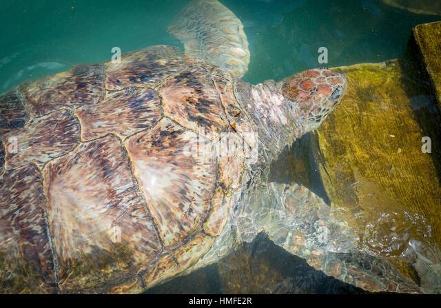 turtle pool stock photos amp turtle pool stock images alamy