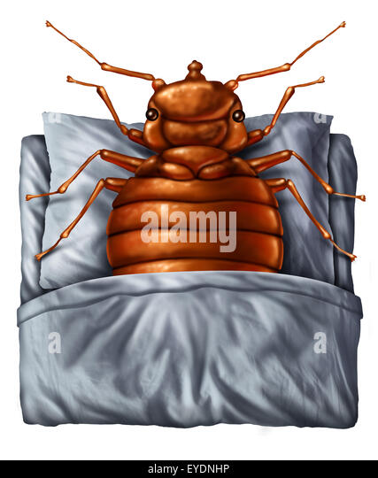 Bedbug or bed bug concept as a parasitic insect pest resting on a pillow under the sheets as a symbol and metaphor - Stock-Bilder