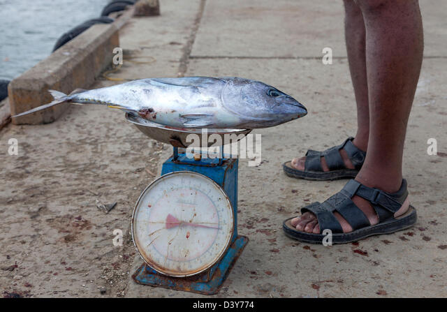 Fish on weighing scales stock photos fish on weighing for Fish weight scale