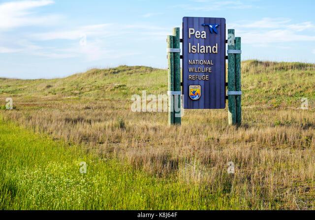 North Carolina NC Outer Banks Cape Hatteras National Seashore Pea Island wildlife refuge habitat preservation bird - Stock Image