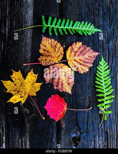 Directly Above Shot Of Dry And Fresh Leaves On Wood - Stock Image
