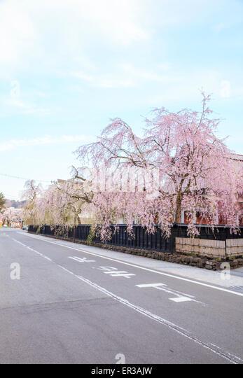 Weeping Cherries of Kakunodate's Samurai District, Akita, Japan - Stock Image