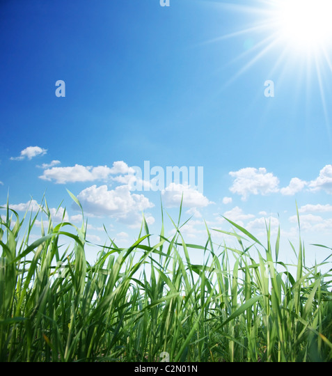 Green grass and sunny sky - Stock Image