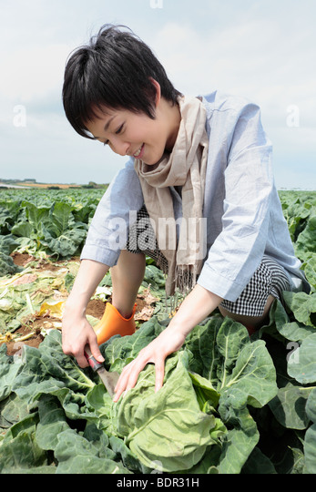 Young woman harvesting cabbage in field - Stock Image