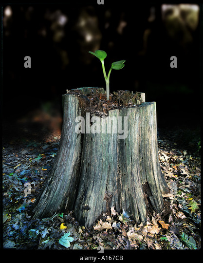 Small sprout growing on old dead tree-stump depicting old versus new - Stock Image