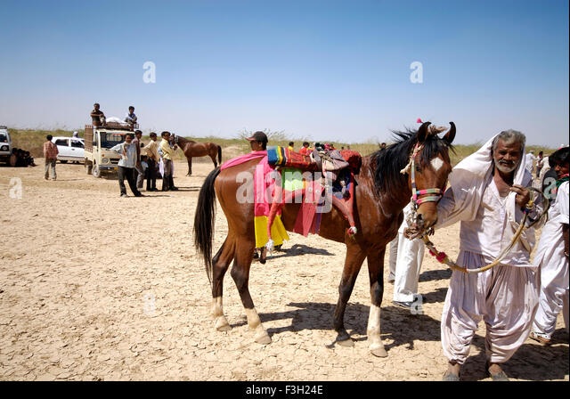 A rider shows off his horse at Shivratri fair ; Kutch ; Gujarat ; India - Stock Image