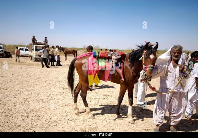 A rider shows off his horse at Shivratri fair ; Kutch ; Gujarat ; India - Stock Image