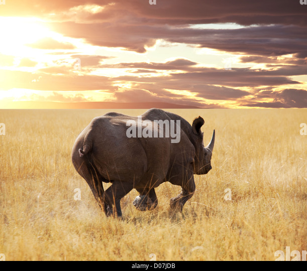 rhino and antelope Gny in Etosha Park - Stock Image