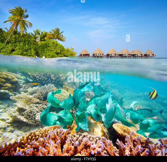 Underwater scenery at Maldives Island - Stock Image