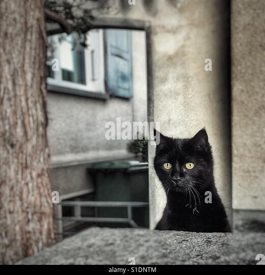 Curious black cat peering over a wall - Stock Image