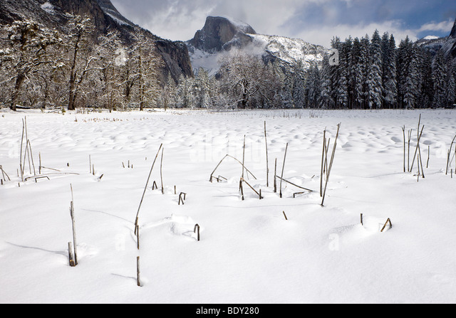Reeds in Cook's Meadow with Half Dome, Yosemite National Park, California, USA. - Stock Image