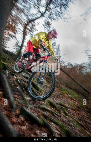 Mountain biker riding downhill in a forest, Bavaria, Germany - Stock-Bilder