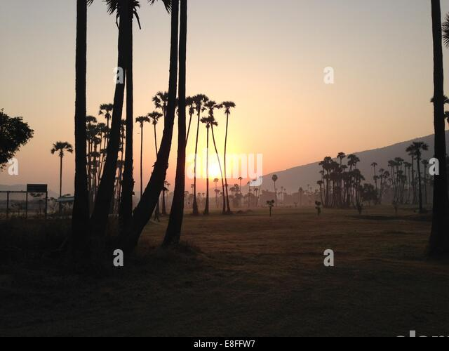 India, Andhra Pradesh, Vishakhapatnam, Vishakapatnam Bypass, Sunrise over palm trees - Stock-Bilder