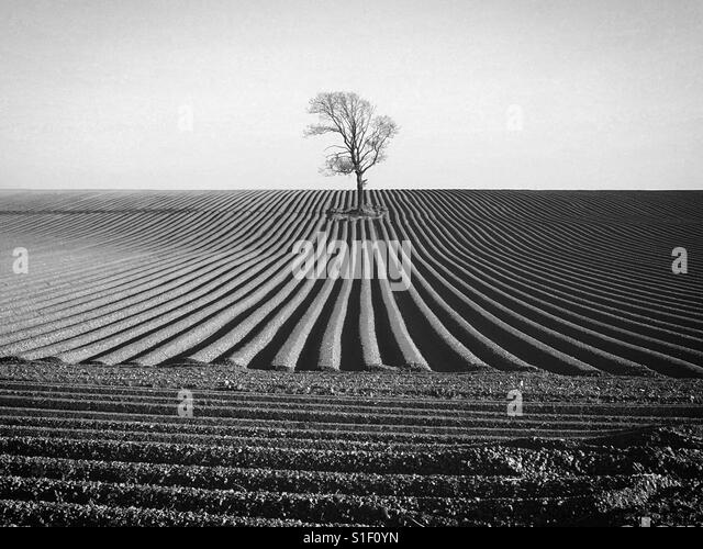 Black and white photo of a Single tree in a newly ploughed field on a sunny day - Stock-Bilder