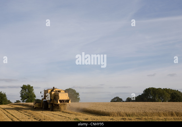 Combine harvester in wheat field - Stock Image