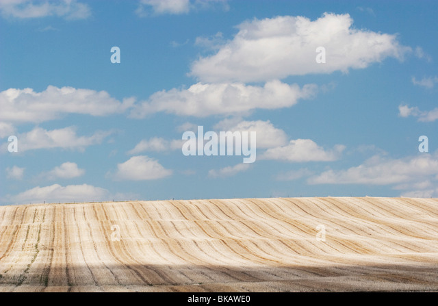 Alberta, Canada; Cut Brown Field With Clouds In The Sky - Stock Image