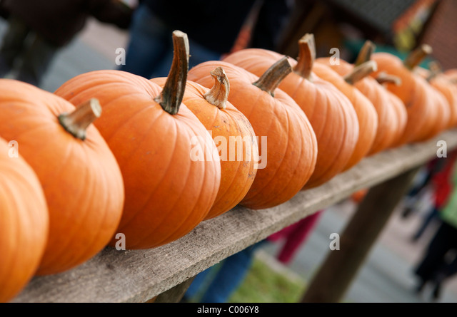Row of pumpkins at a pumpkin festival close Hamminkeln in Germany. - Stock Image