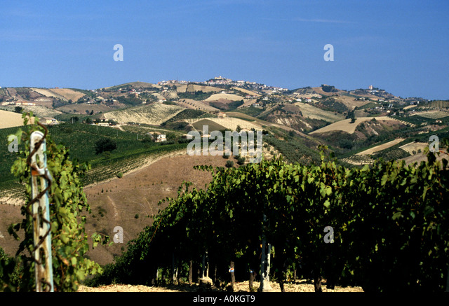 Typical Le Marche Patchwork landscape Italy - Stock Image
