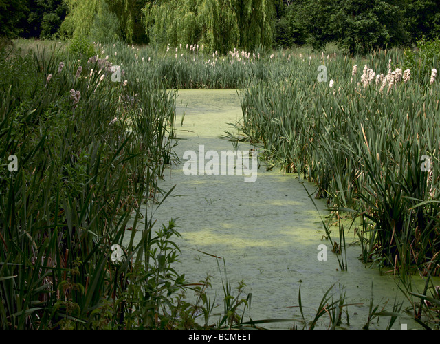 Algal bloom lake stock photos algal bloom lake stock for Ornamental pond fish port allen