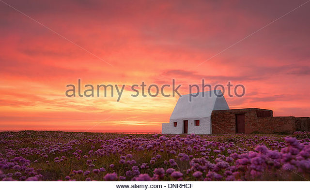The White House at Sunset amongst Flowers - Stock Image