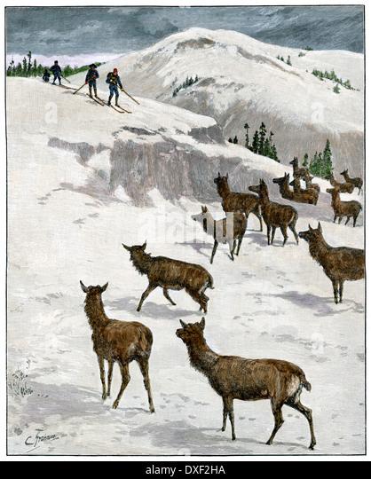 US Cavalry patrolling Yellowstone on skis, viewing an elk herd, 1880s. - Stock-Bilder