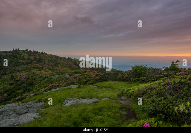 Grassy Patch Among Rhododendron Garden in Blue Ridge mountains - Stock Image