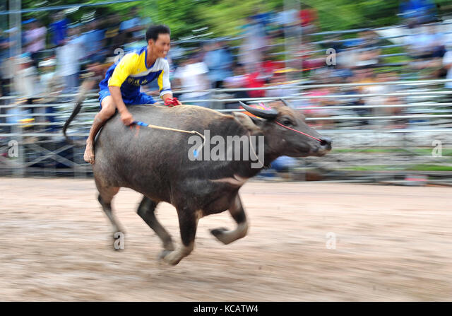 Chonburi, Thailand. 4th October, 2017. A racer competes during an annual buffalo racing in Chonburi, Thailand. Credit: - Stock Image