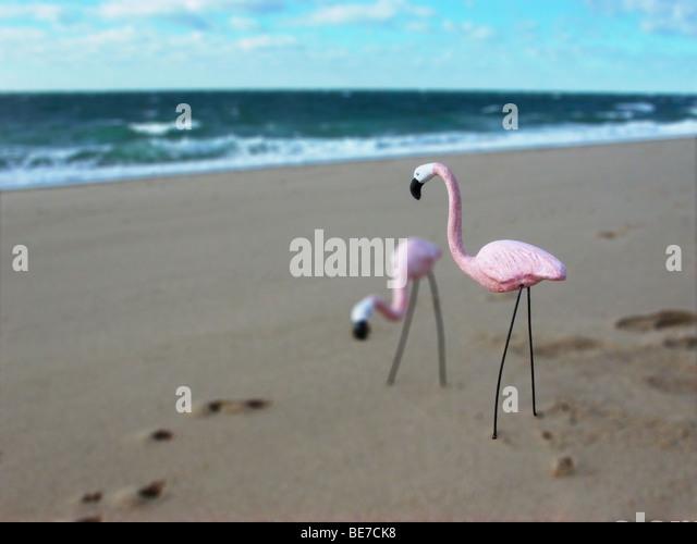 flamingos on beach - Stock Image