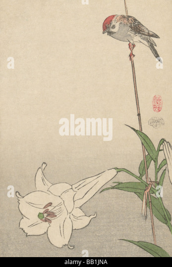 Small bird on lily plant. - Stock Image