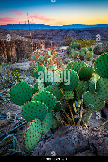 Big Bend National Park in the U.S. state of Texas has national significance as the largest protected area of Chihuahuan - Stock Image