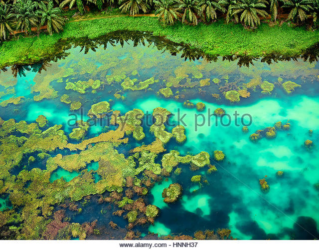 An aerial view captures the luxuriant hues of Johor's landscapes, such as this pool edged with a field of palms. - Stock-Bilder