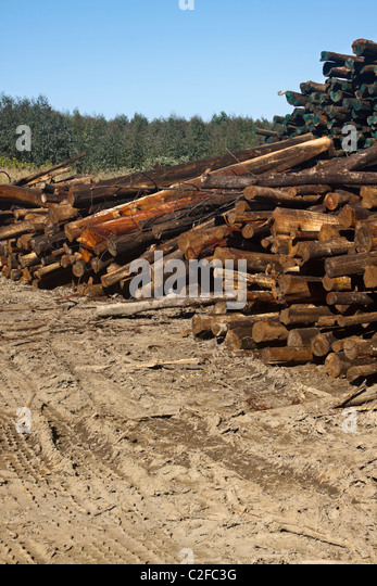 Timber logs stock photos images alamy
