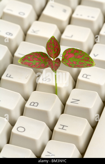 Computer Keyboard and sprout, concept of learning - Stock-Bilder
