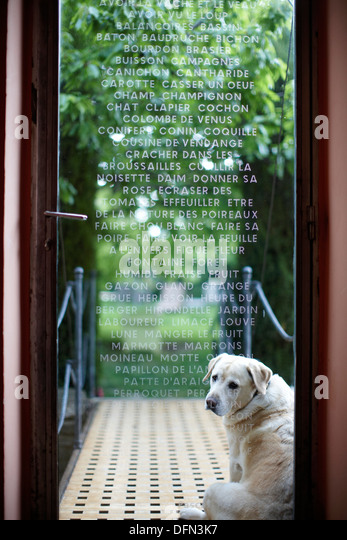 Dog waiting door stock photos dog waiting door stock for Chambre avec vue