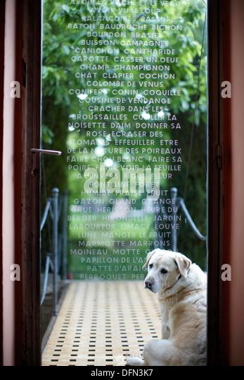 Dog waiting door stock photos dog waiting door stock for Chambre avec vue
