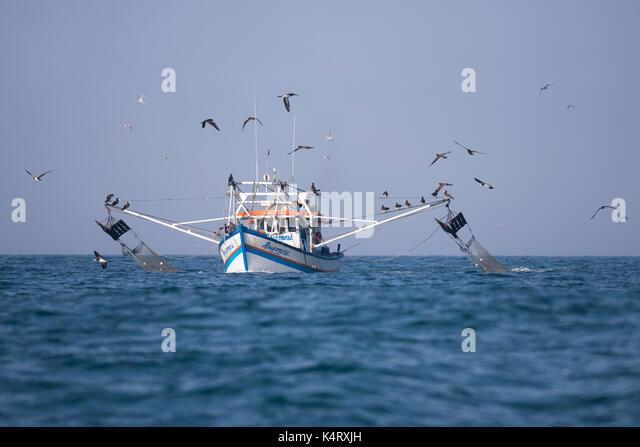 Shrimp trawling fishing boat from Ilhabela, SE Brazil - Stock Image