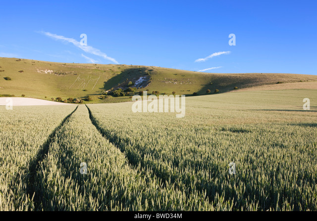 Tracks leading through field to The Long Man of Wilmington; East Sussex; England, Great Britain - Stock Image