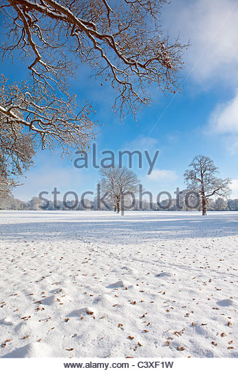 Trees and field in snow covered winter landscape - Stock Image